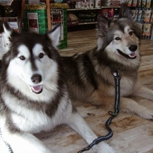 Happy dogs at pet food store.